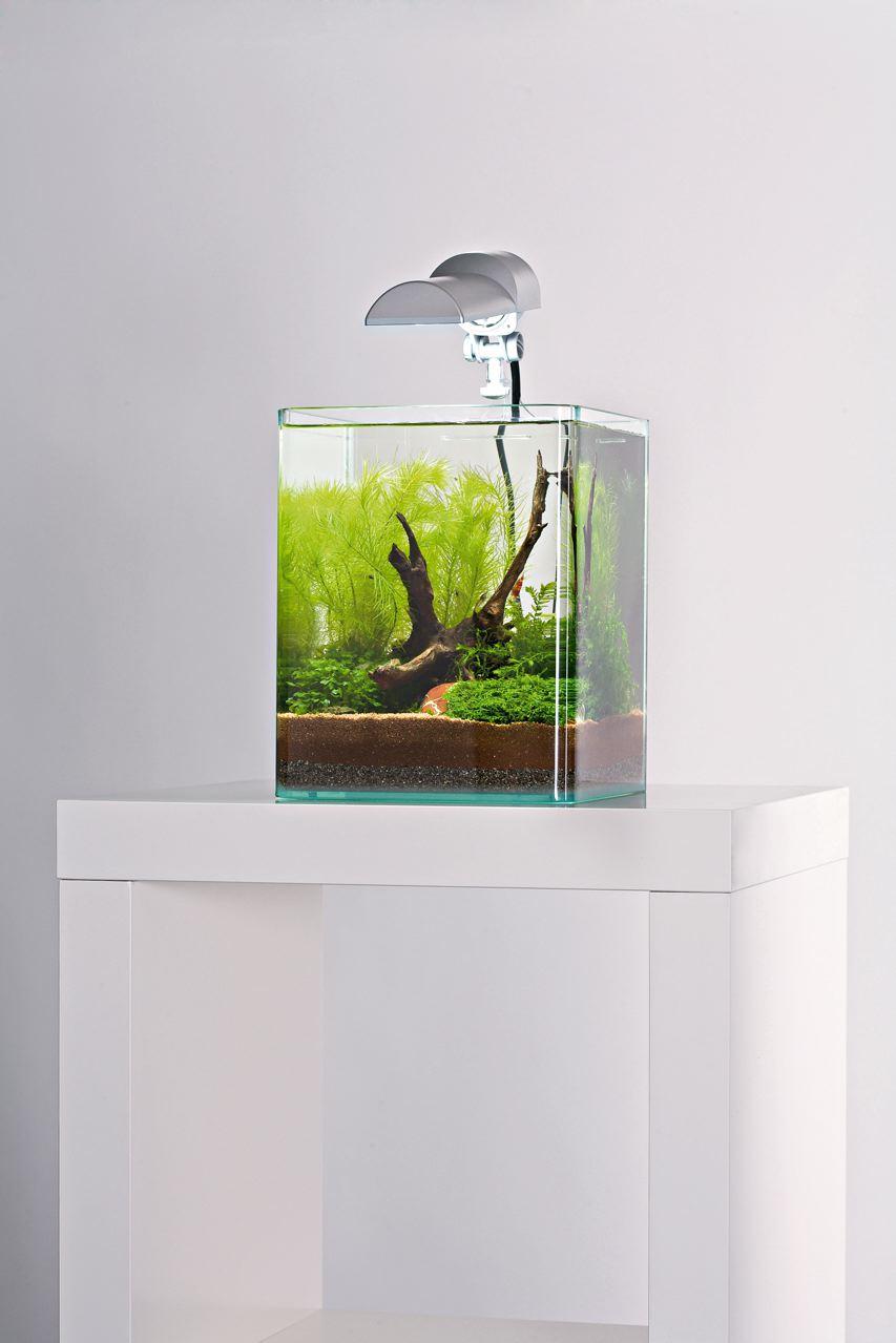 Elegant aquarium petit id es de conception de table basse for Petit aquarium original