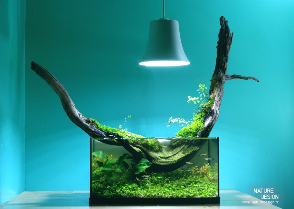 Terrariums aquariums les jardins d 39 int rieur pour l 39 hiver for Nature decor