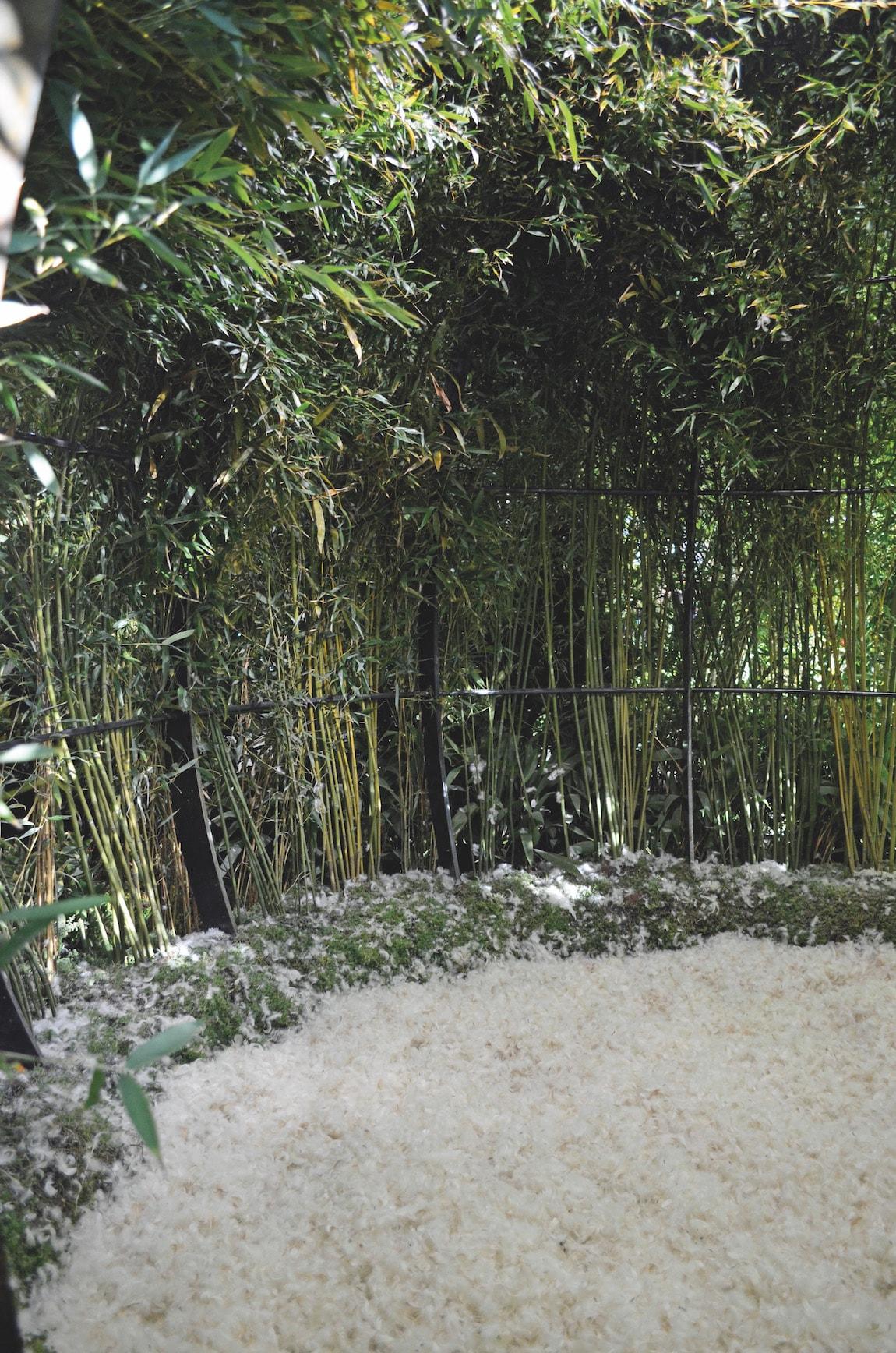bambouseraie et plumes
