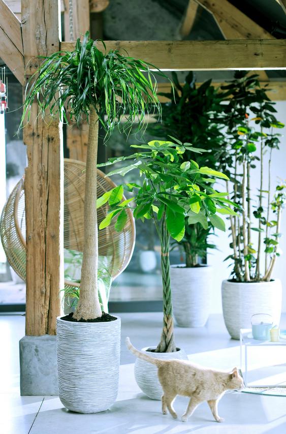 plantes totems plantes d'intérieur