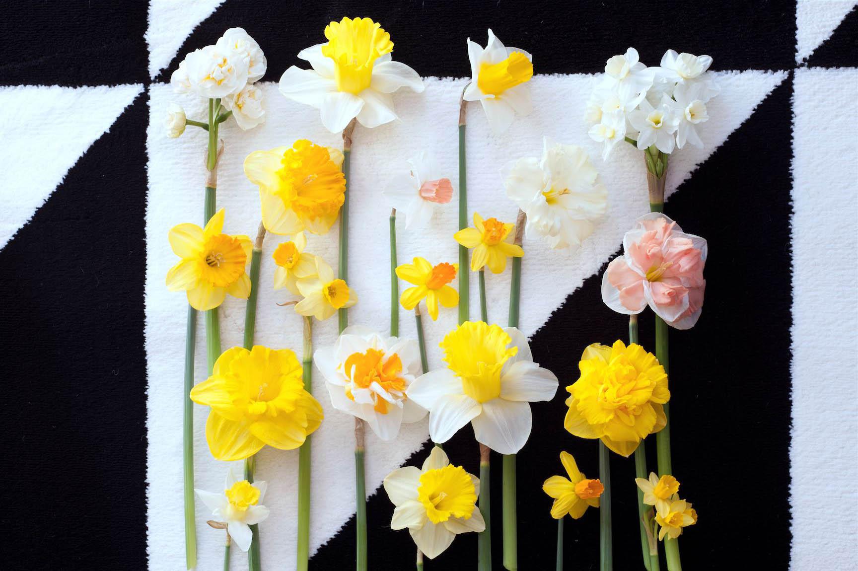 Narcisses - ma plante mon bonheur -compressed