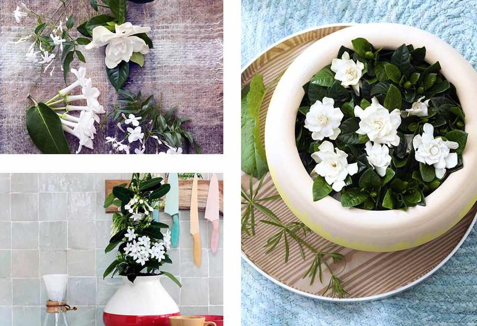 Plante du mois de mars les fleurs blanches parfumées