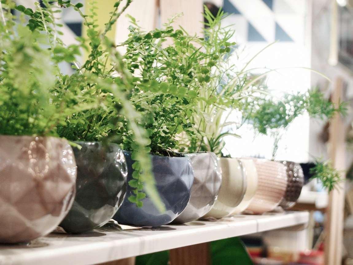 Bar à plantes chez Bobart'