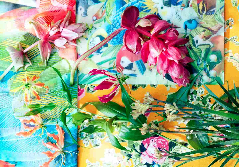 Gloriosa plantes exotiques du mois de mai