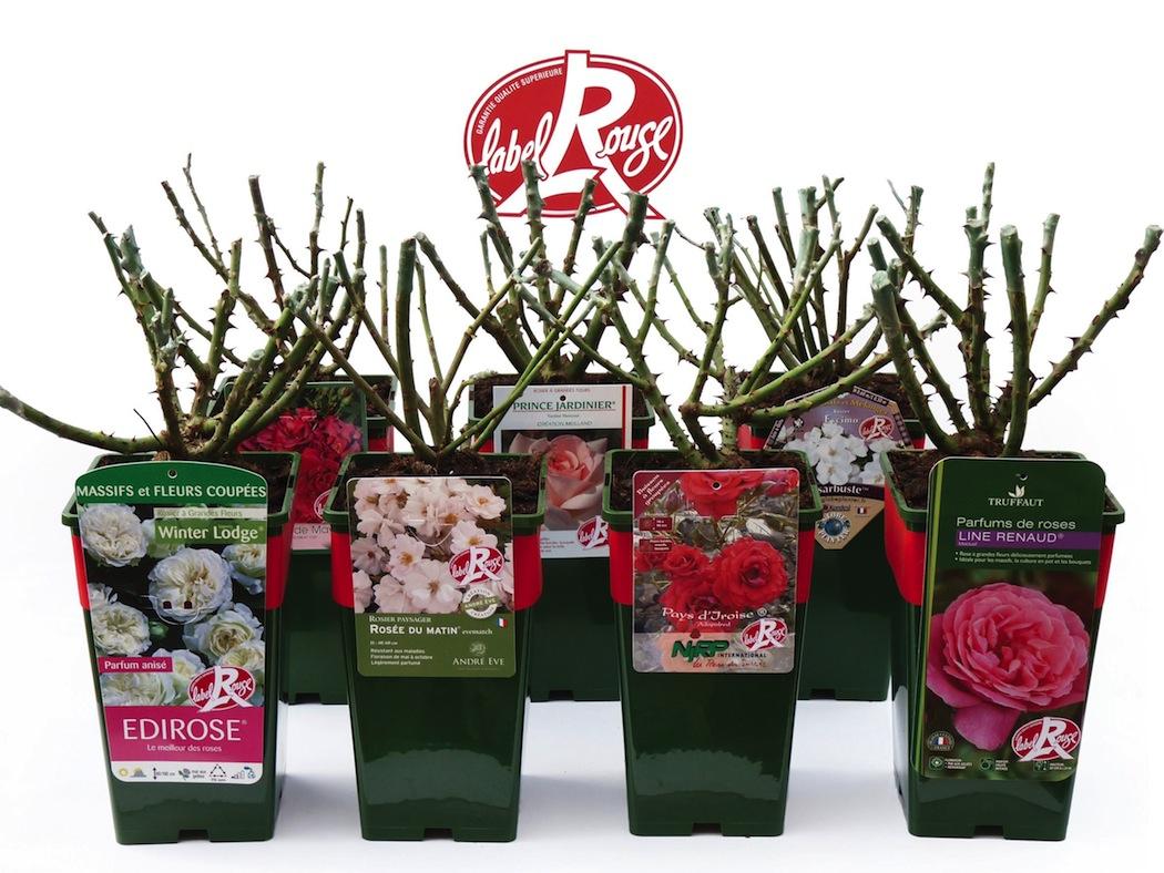 Label Rouge : les 1ers rosiers labellisés