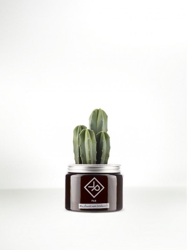 Pour la fête des pères : Le Myrtillocactus en pot