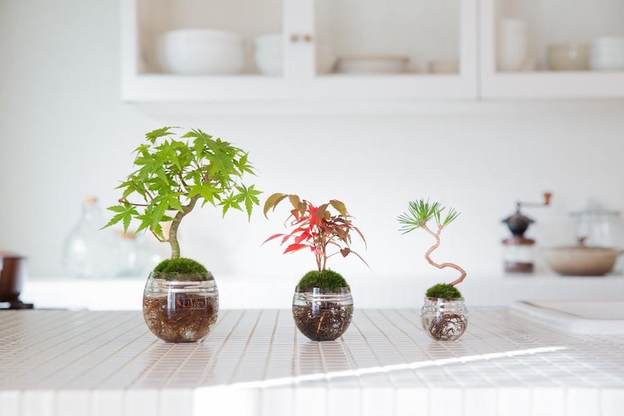 Terrariums, aquariums : des jardins d'intérieur pour l'hiver