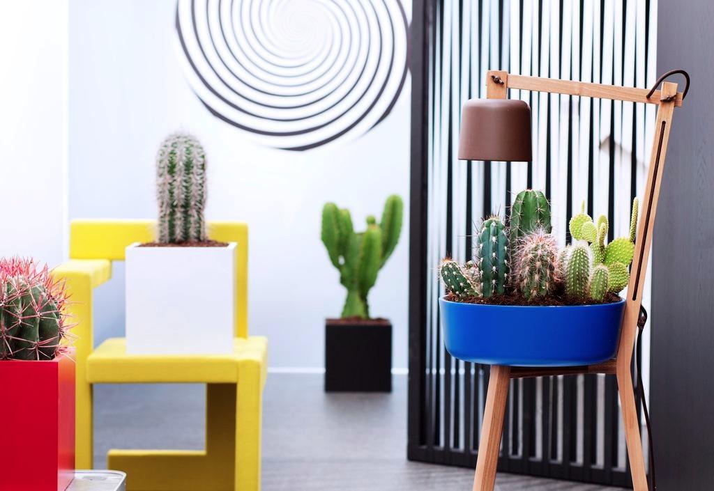 Le cactus, plante du mois d'aout
