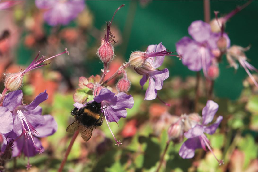 Toundra Flore la solution biodiversité en milieu urbain