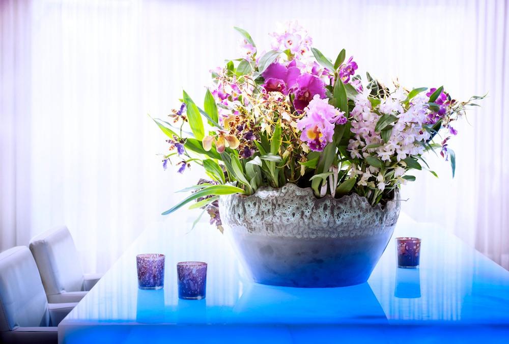 Orchidées d'exception, plante du mois de novembre