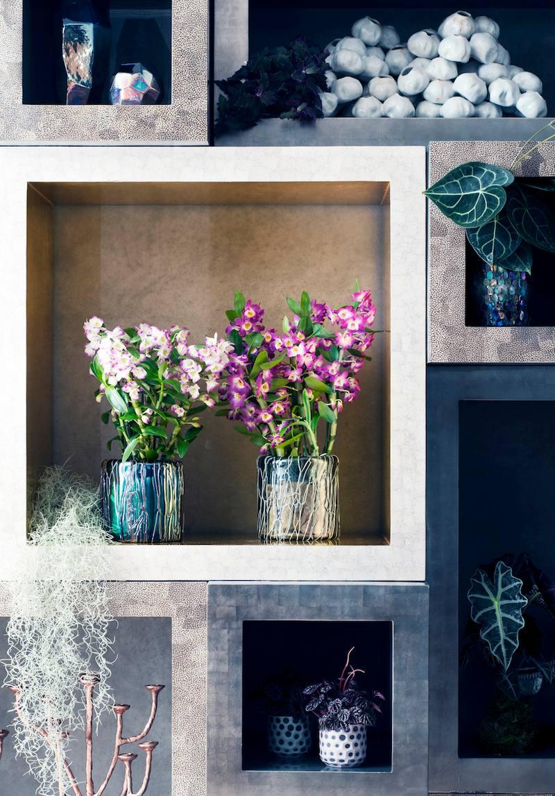 Orchidées d'exception dans la décoration