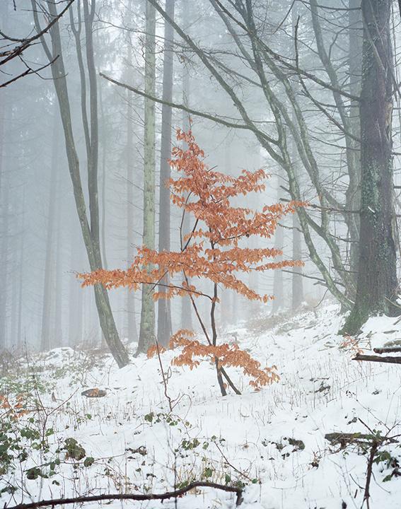 Des arbres en hiver à chaumont sur loire
