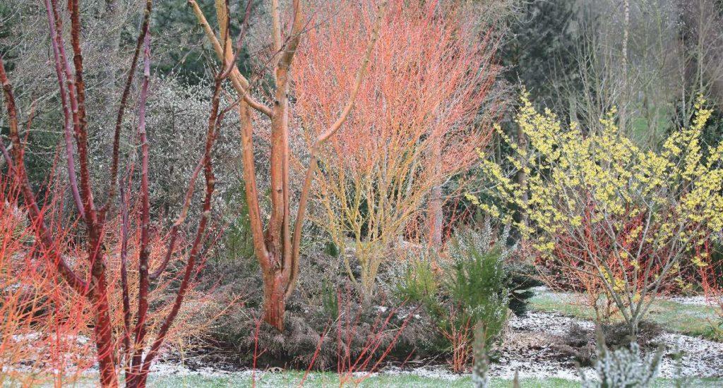 jardins d 39 hiver une flamboyance hivernale ext rieurs design. Black Bedroom Furniture Sets. Home Design Ideas