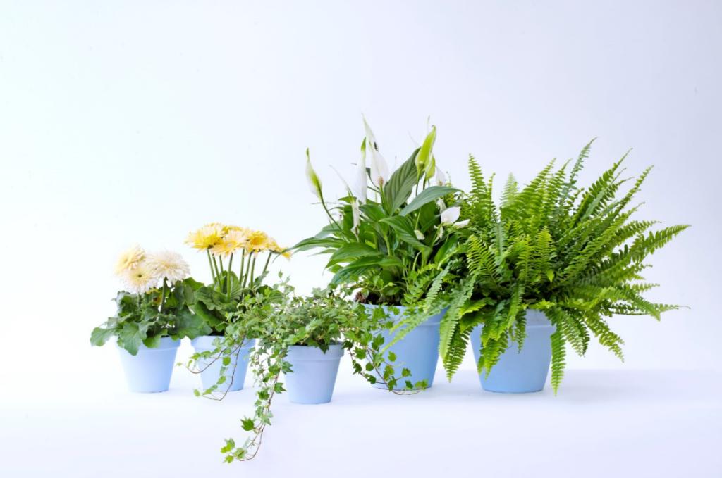 la plante du mois les plantes g n ration oxyg ne ext rieurs design. Black Bedroom Furniture Sets. Home Design Ideas
