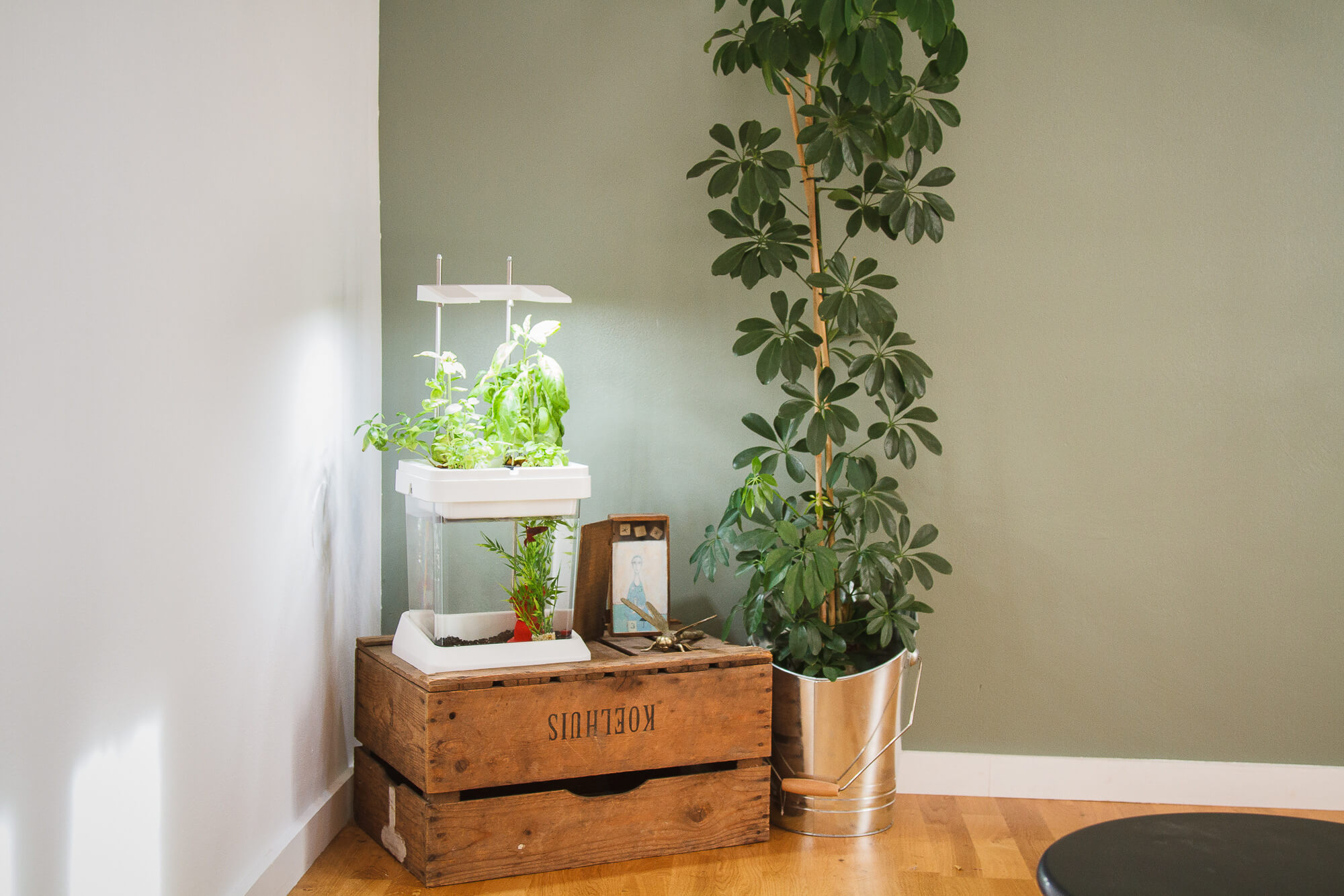 potager d 39 int rieur un concept 100 bio ext rieurs design. Black Bedroom Furniture Sets. Home Design Ideas