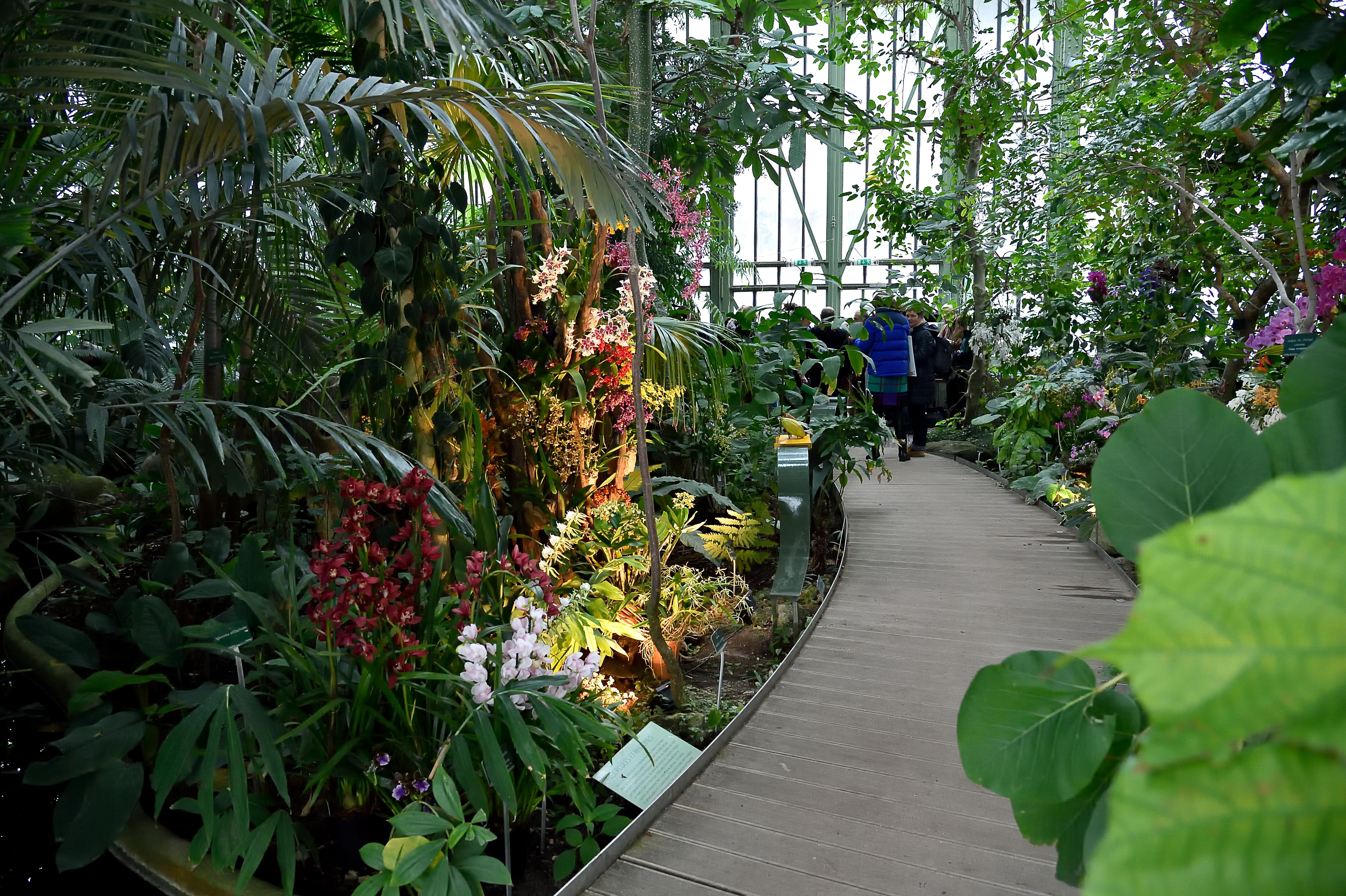 100 variétés d\'orchidées exposées au Jardin des Plantes à ...