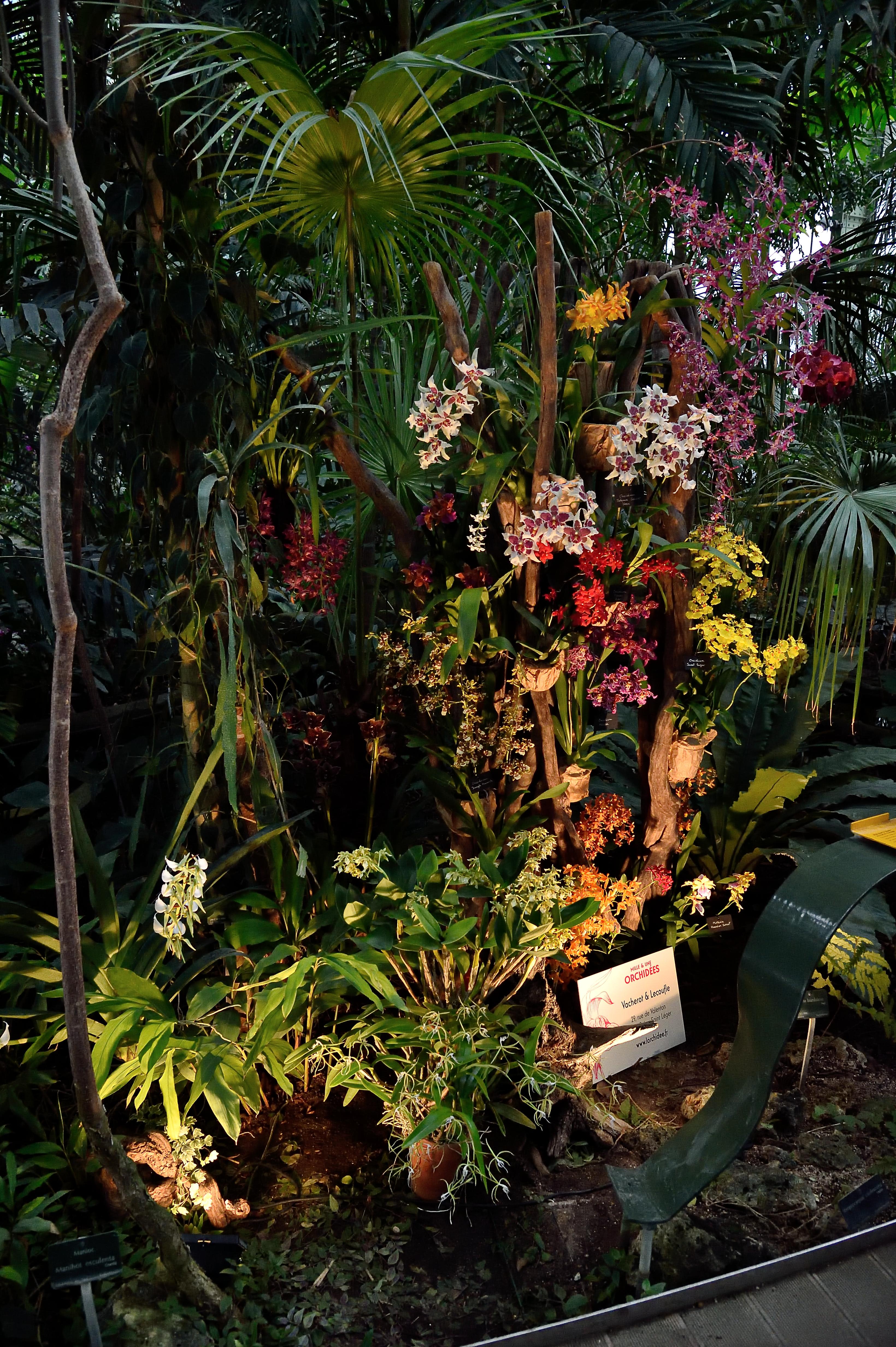 """Exposition """"Mille & Une Orchidées"""" au Jardin des Plantes. Photo : F-G Grandin"""