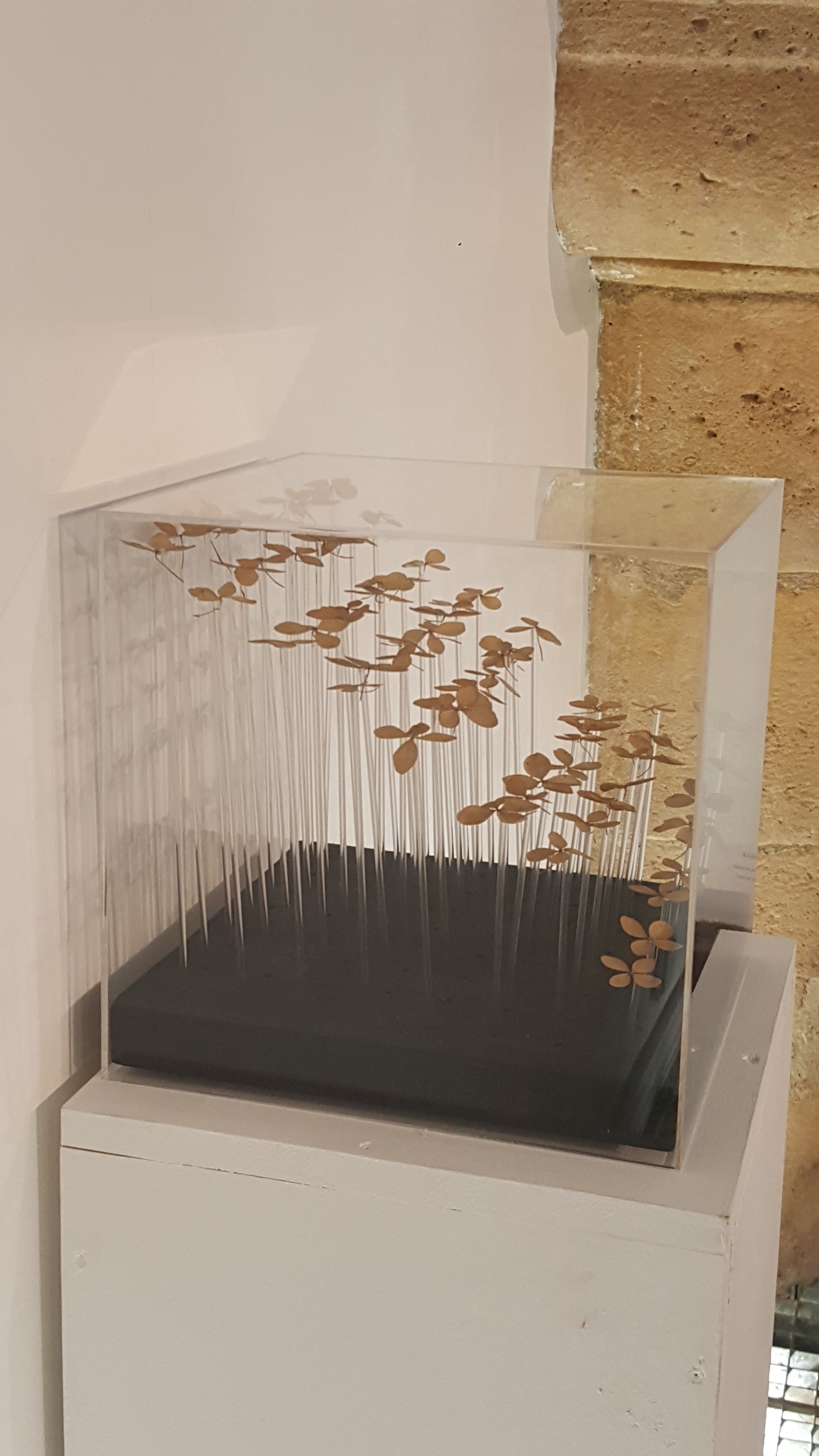 """Dans on exposition, Snezana Gerbault présente aussi des micro installations, tel """" En suspens"""", avec des fleurs d'hortensias séchées."""