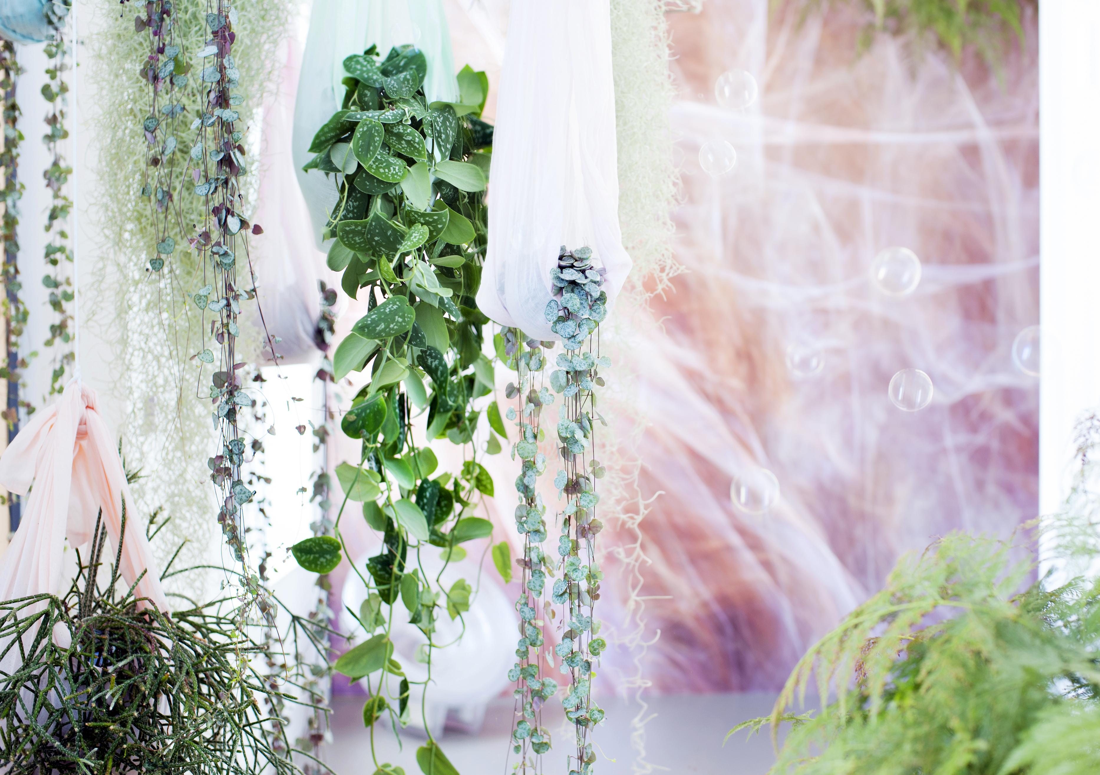 theworldbeyond plantes d'intérieur