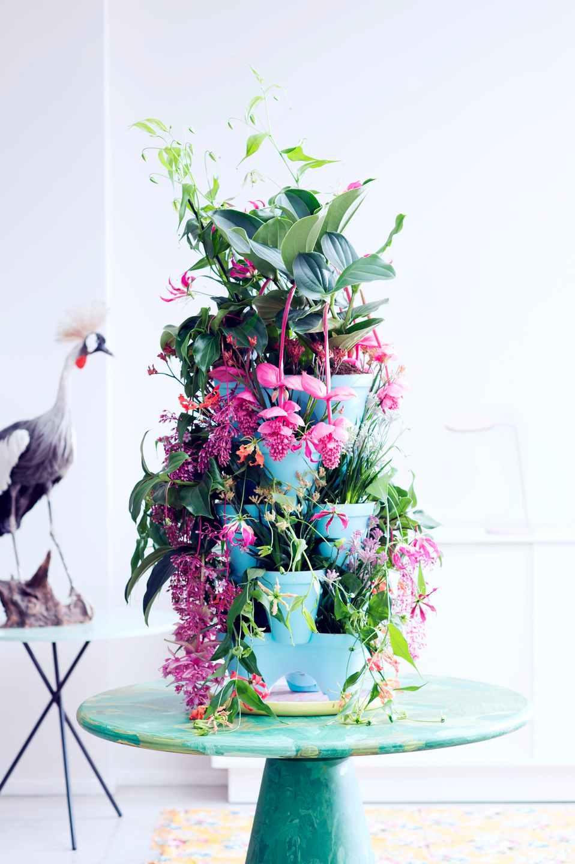 Plantes exotiques du mois de mai