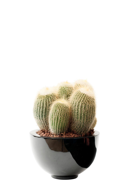 plante-du-mois-le-cactus