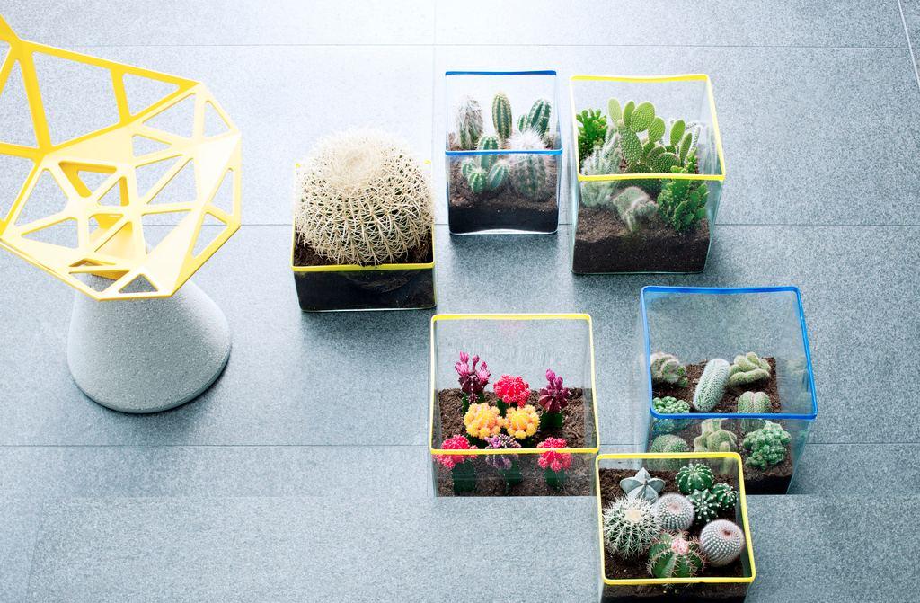 Les cactus, plante du mois d'aout pour l'été