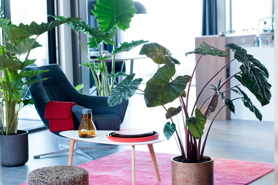 Plante architecture tendances végétales 2017