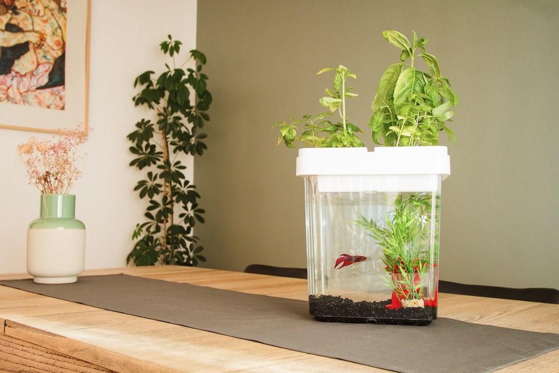Aquarium potager Citizenfarm blanc