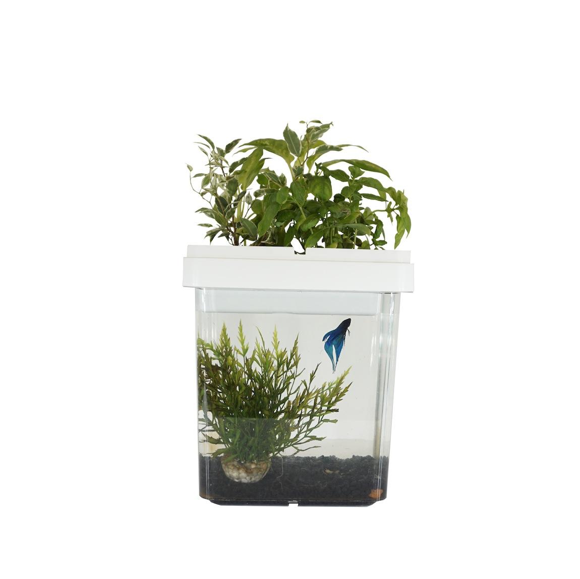 pot blanc Citizenfarm aquarium potager
