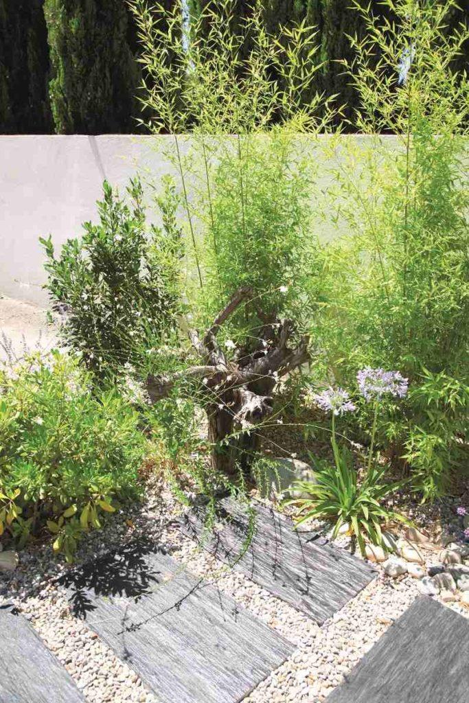 jardin urbain plantes
